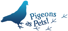 http://www.pigeonsaspets.co.uk/ We are the lucky humans living with two disabled, extremely tame and imprinted feral pigeons, Georgie and Elmo